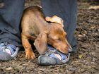 Hundeschule macht müde
