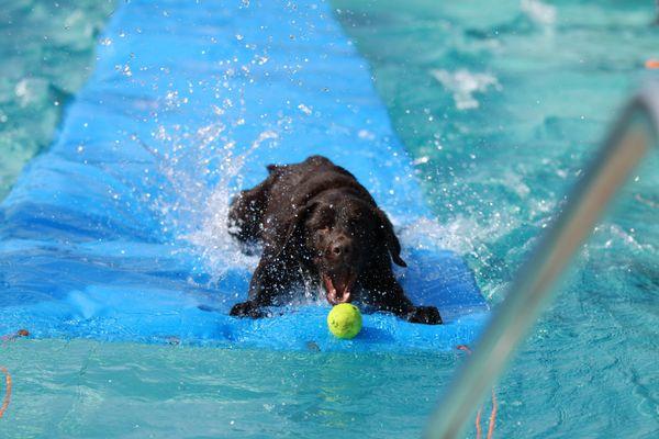 Hundeschwimmen 3