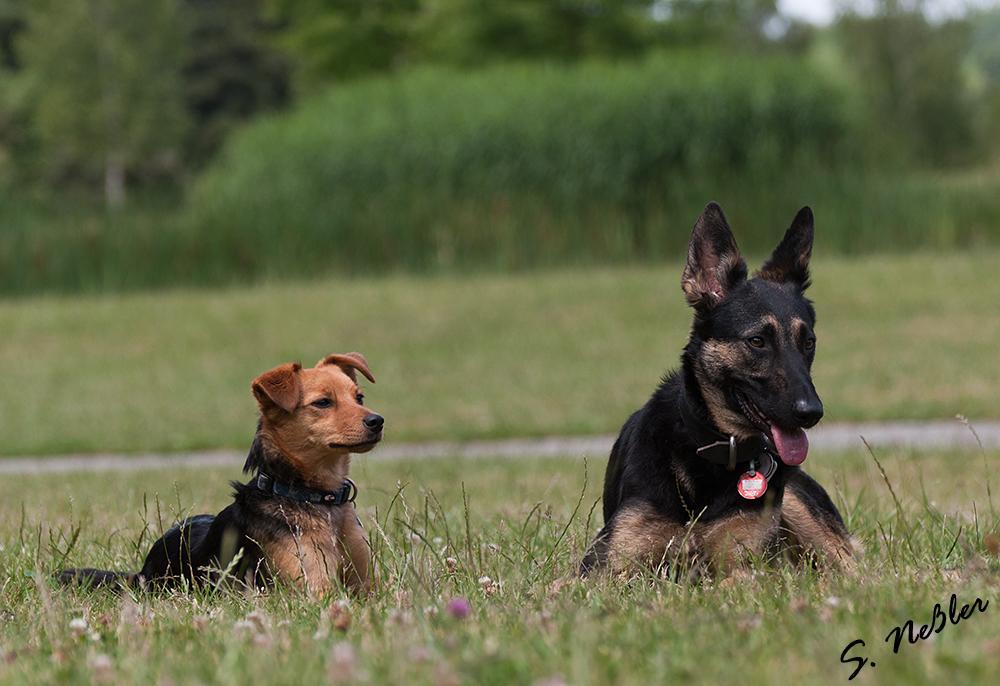 Hundeshooting 9