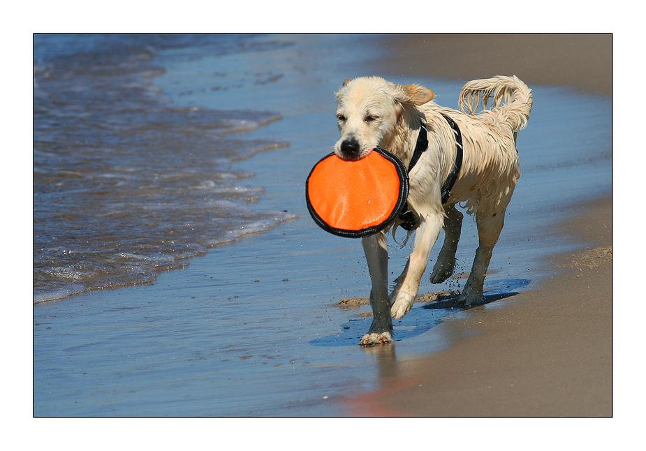 Hundespaß an der Ostsee