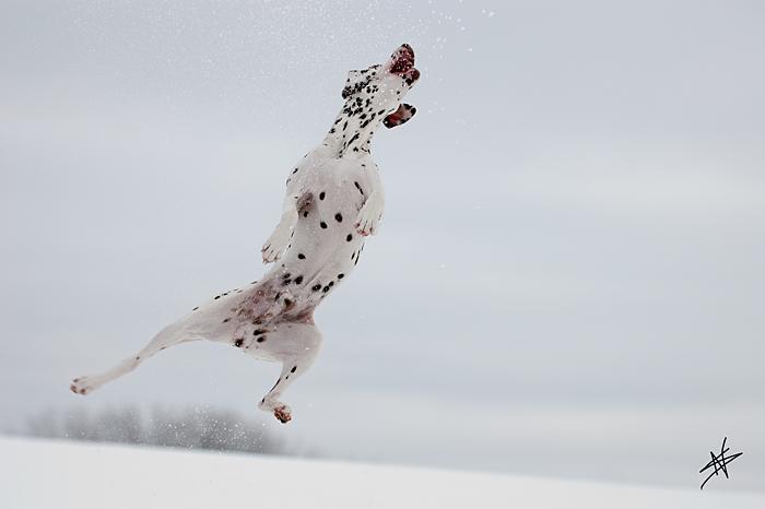 _Hundesport_