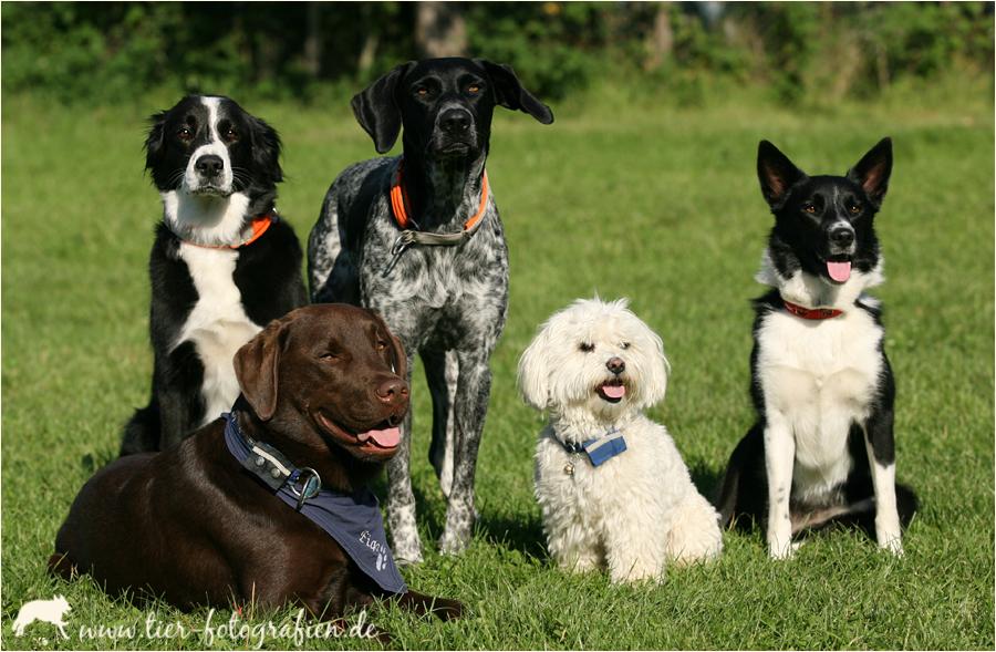 *Hundesport-Clique*
