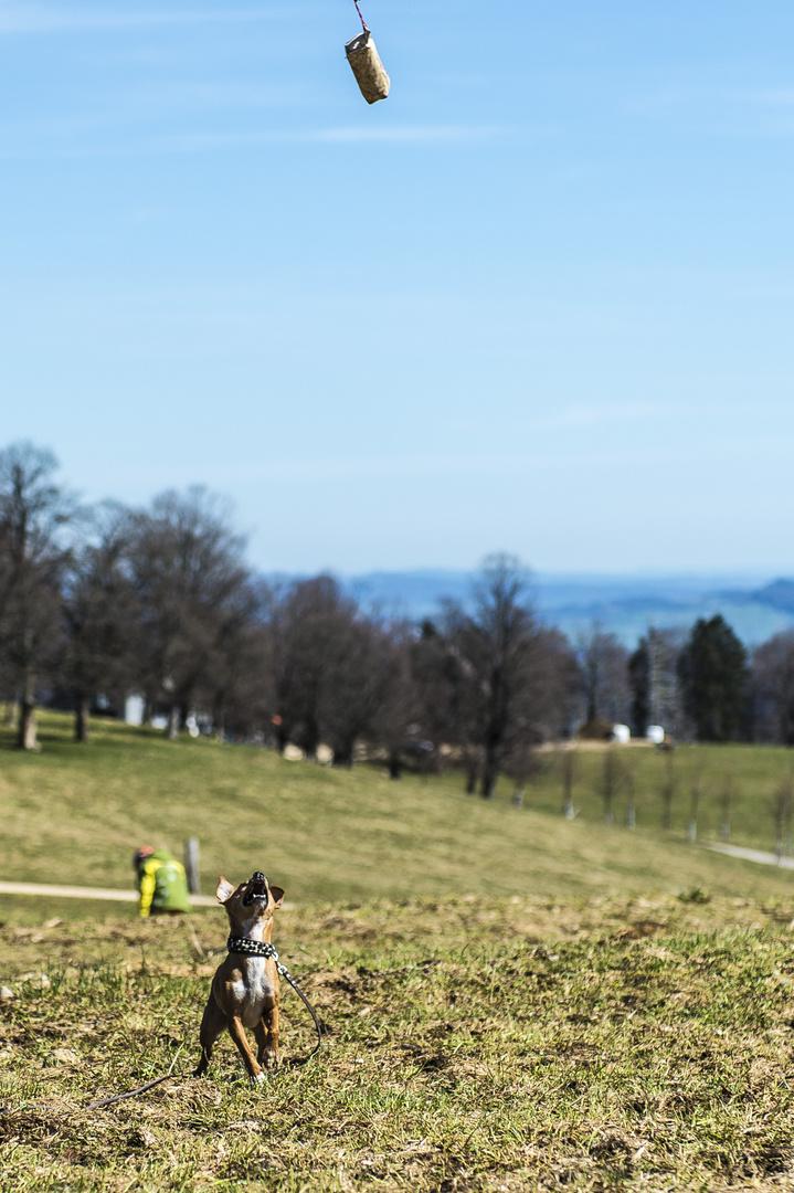 Hundesport mit Schikane