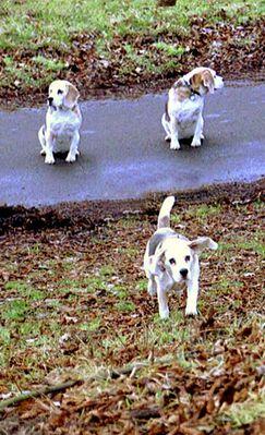 Hundestudie