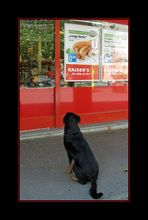 Hundeträume...
