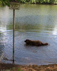 Hundeverbot ? Das kostet mich ein lässiges Schütteln