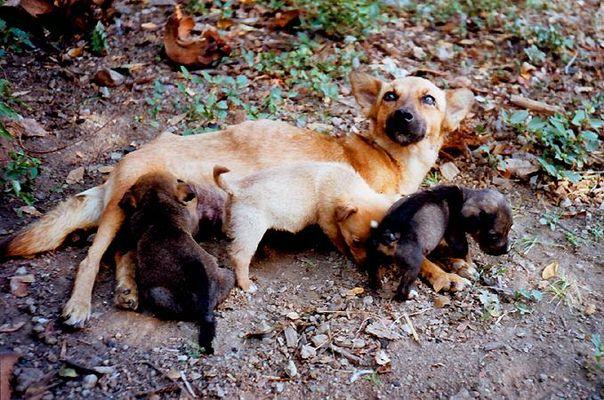Hundewelpen