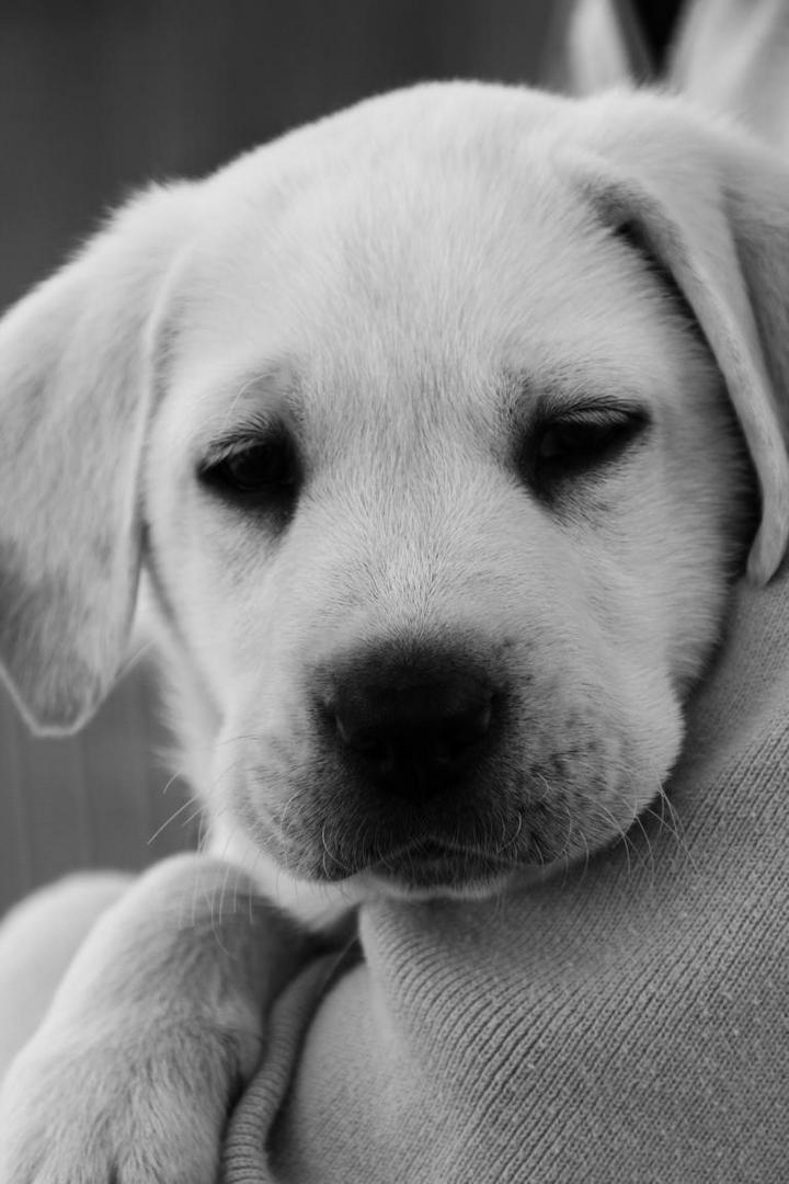 Hundewelpen Bilder