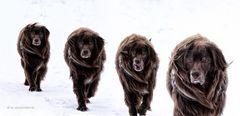 Hundewetter