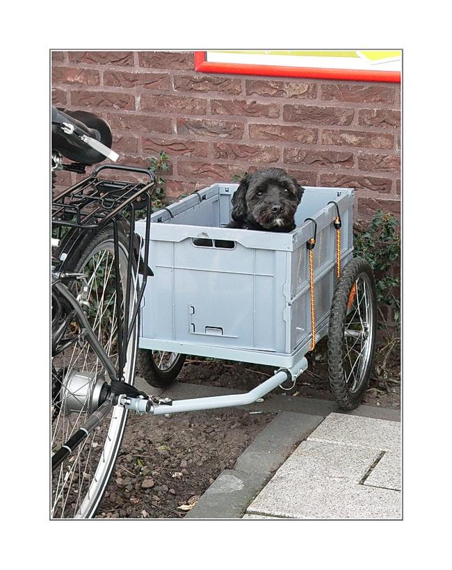 Hundi vor Supermarkt geparkt (Breskens)