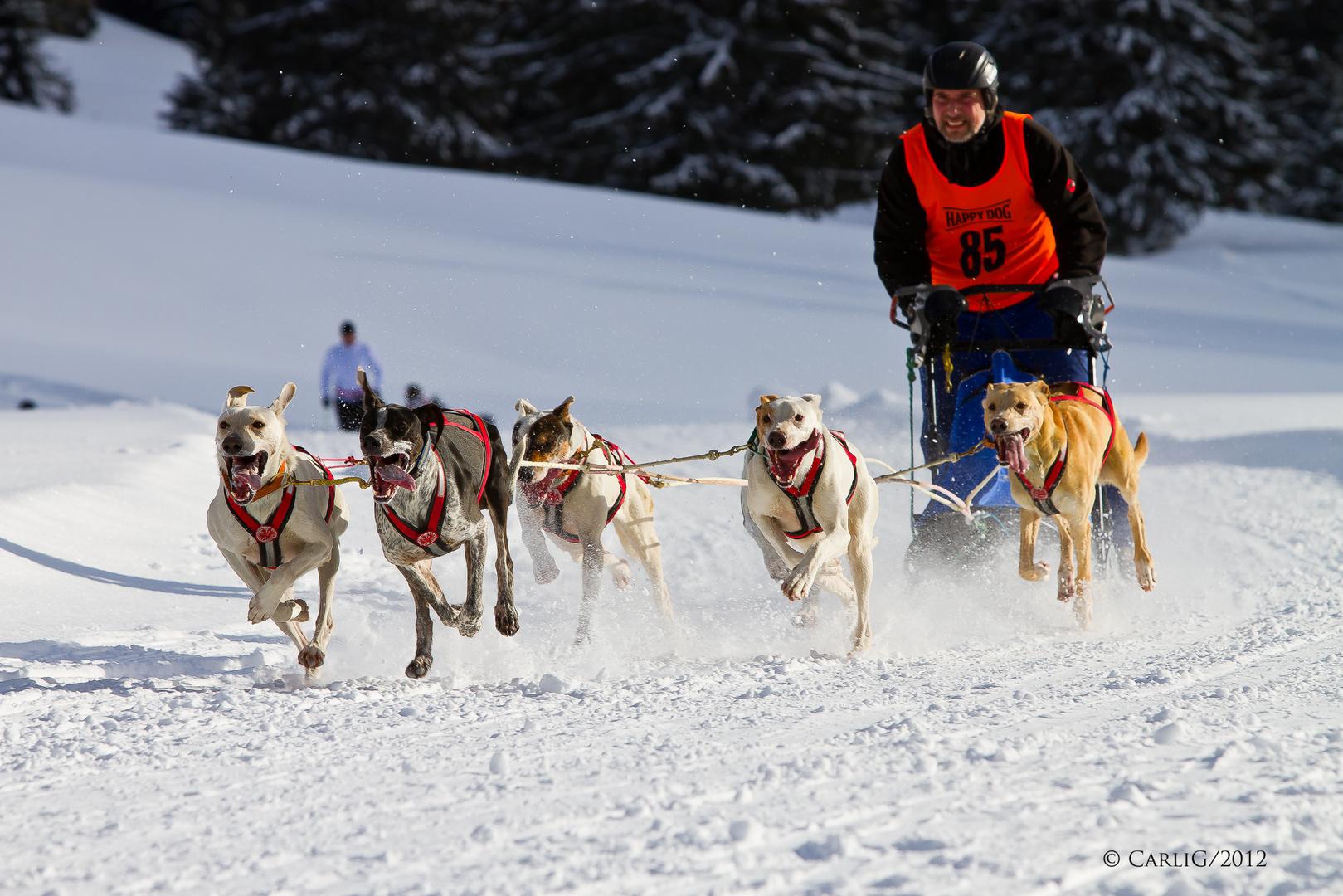Hundschlittenrennen 2012 Bad Hindelang / Unterjoch
