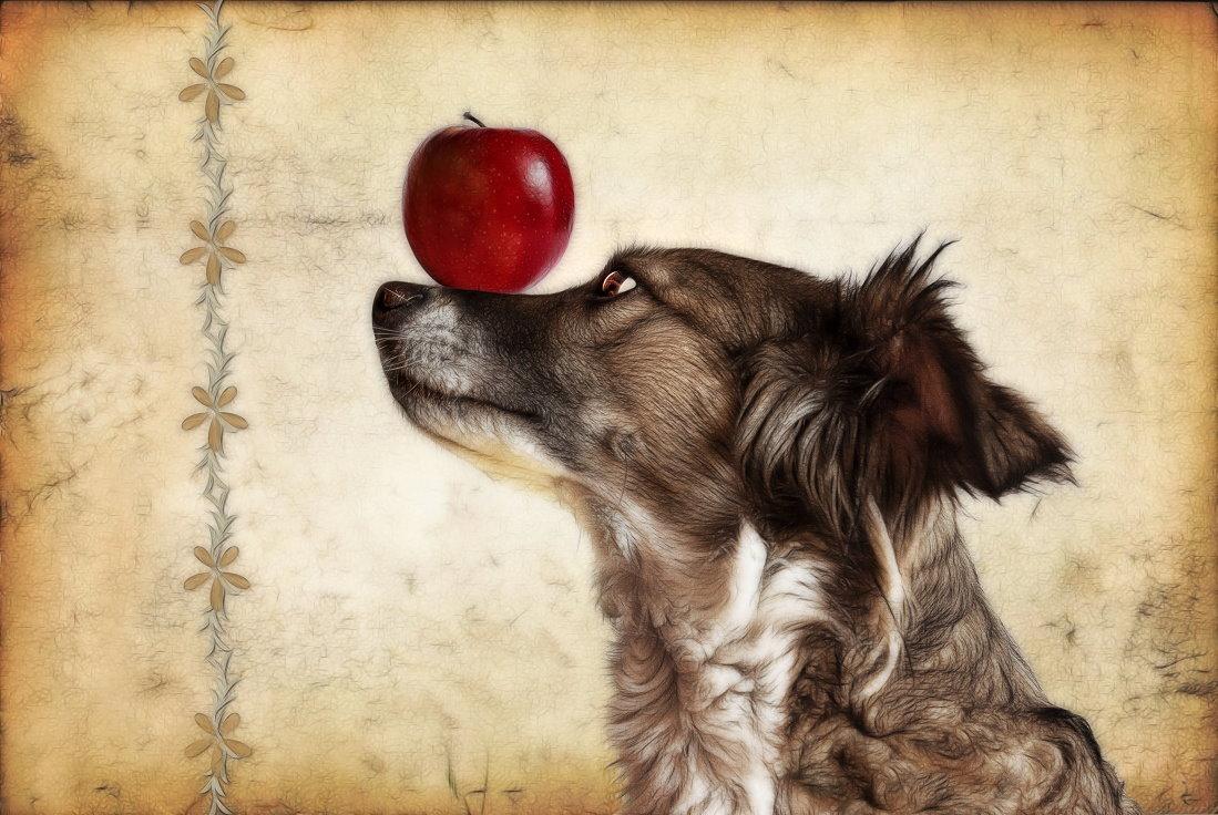 Hundsdoller Balance Akt