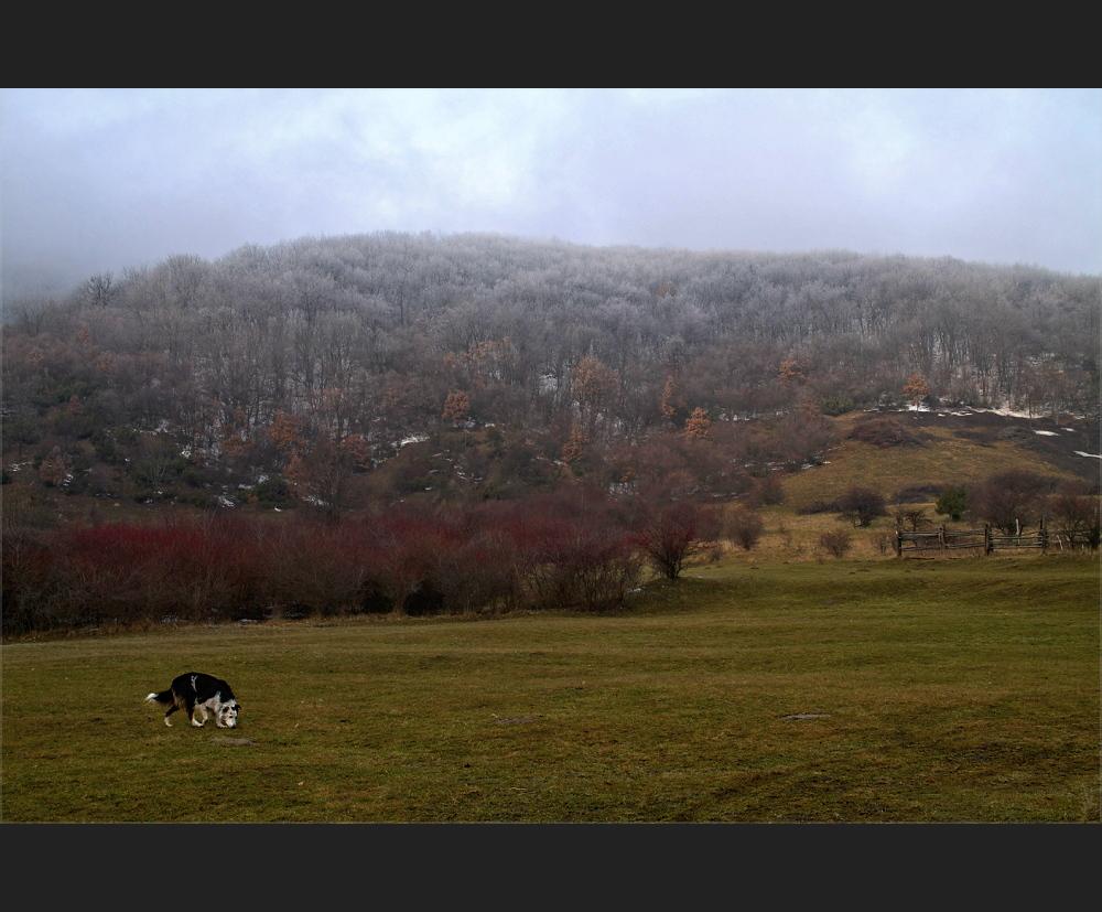 hundsheimer berg