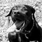 Hundstage II