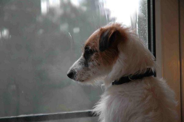 Hundswetter