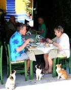 hungrige, aber geduldige Katzen auf der Insel Symi