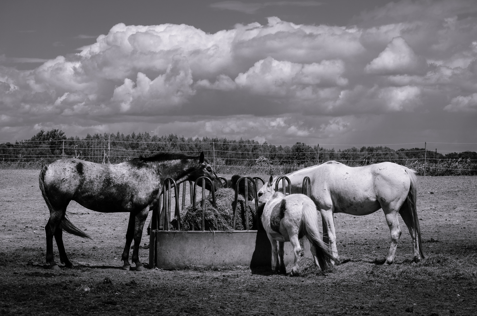 Hungry Horses