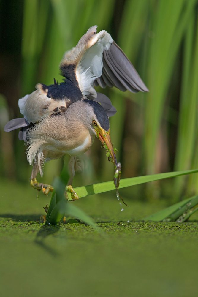 hunting reeds 4