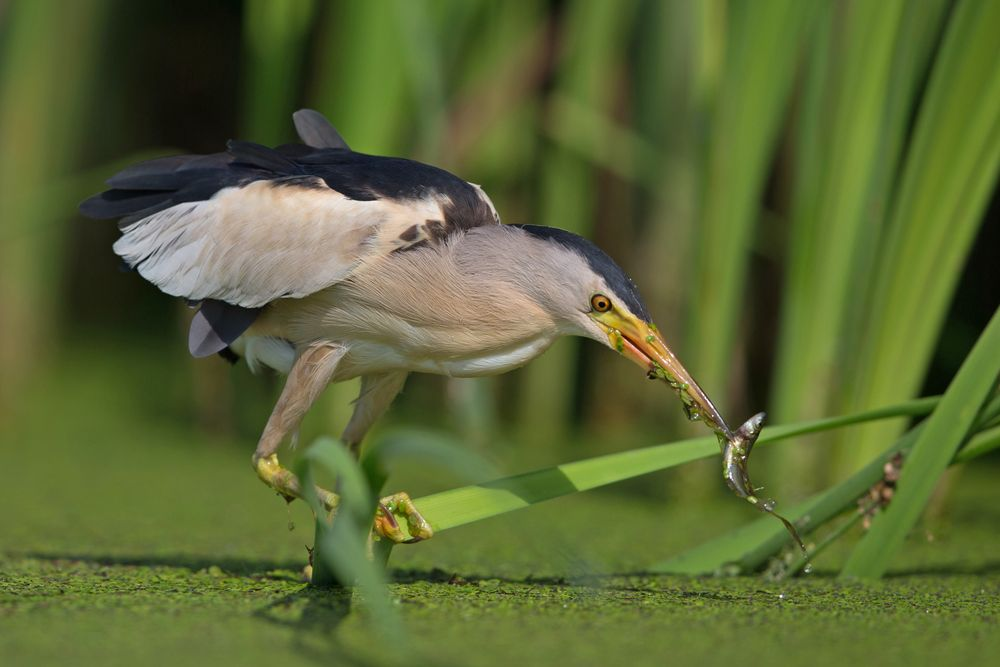 hunting reeds 6