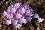 Hurra, es wird Frühling !
