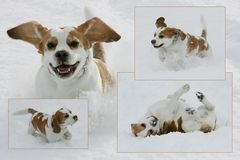 hurra, Schnee!!!