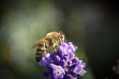 Insekten und Co.
