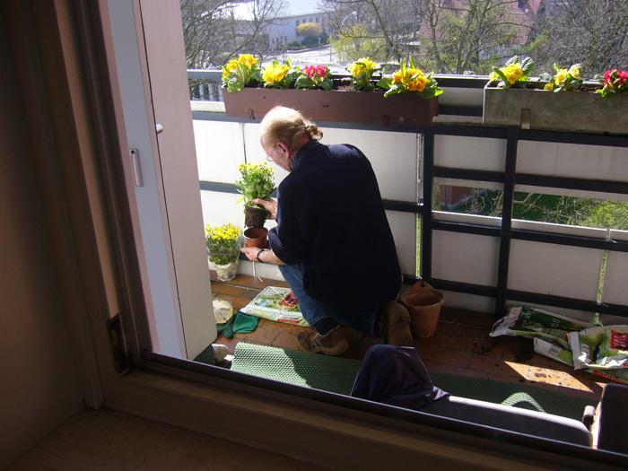 Hurrah, mein Balkon wird bepflanzt !