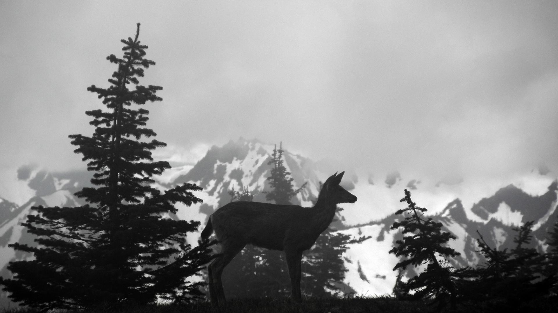 hurricane ridge olympic national park, Washington