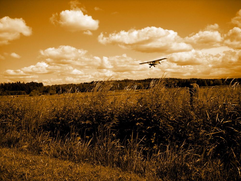 Husky im Landeanflug