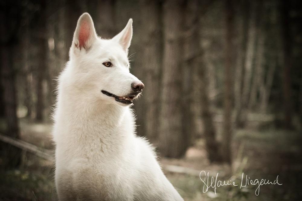 Husky | Nimmersatt