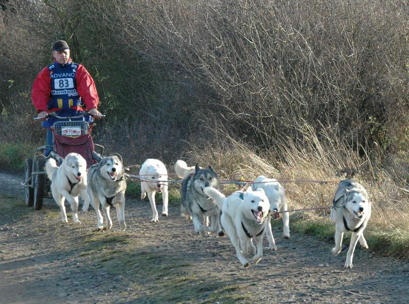 Huskyrennen in Soller