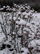 hutmode bei pflanzen