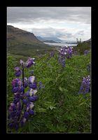 Hvaljörður