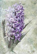 Hyacinthus ...