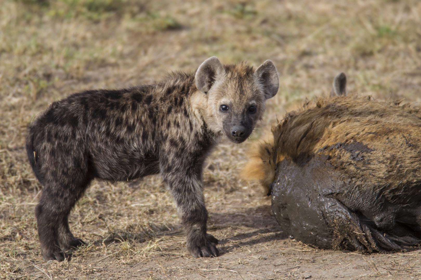 Hyänenbaby