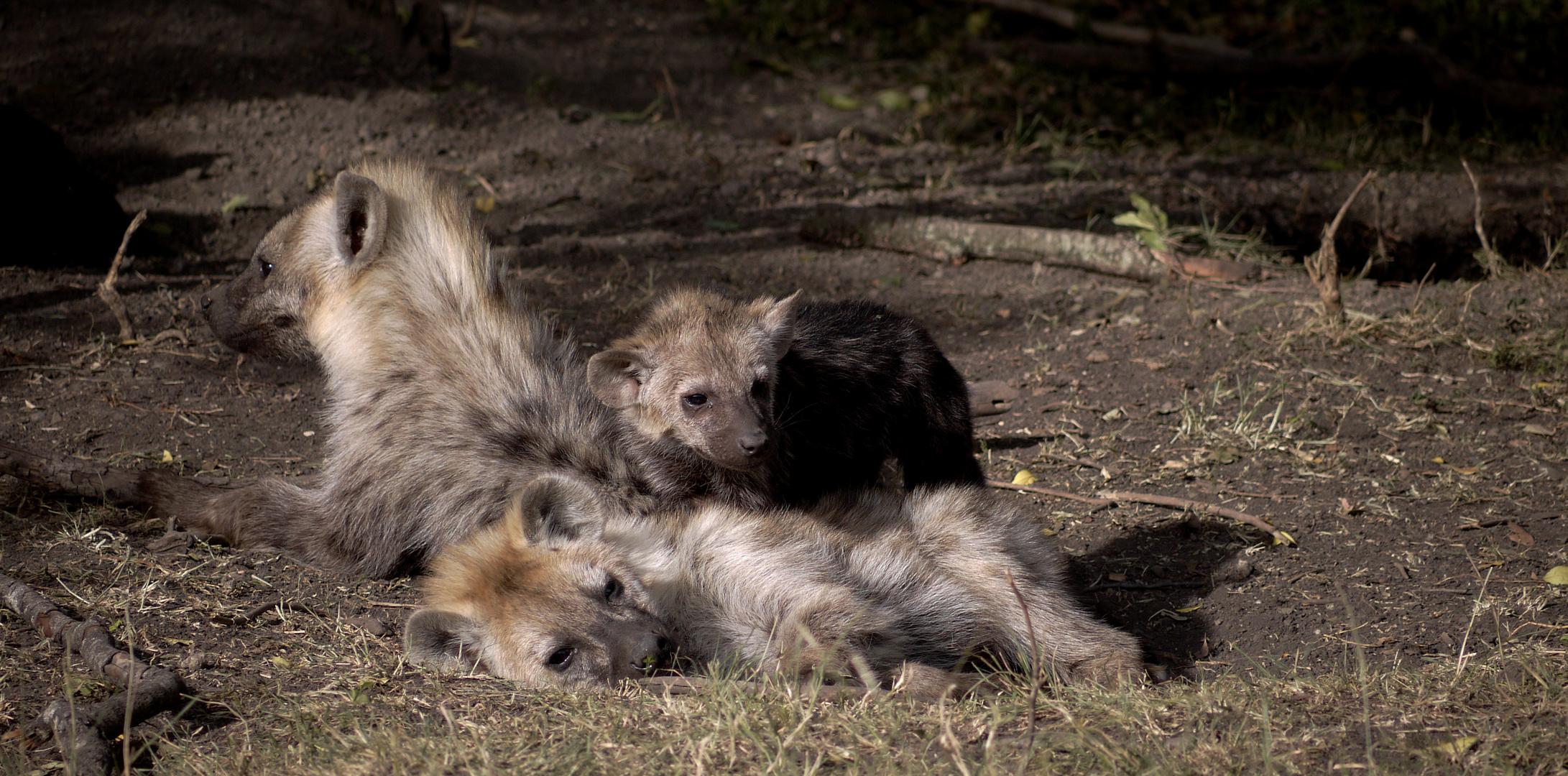 Hyänenkinder in der Mara