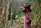 Hydrant auf dem ehemaligem...