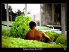 Hydroponic Farmer