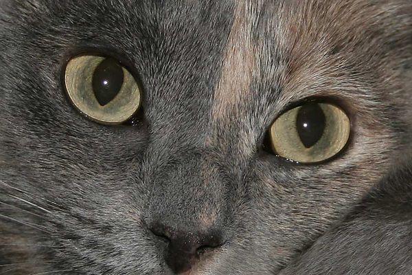 Hypnotische Katzenaugen