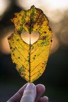 I <3 Herbst