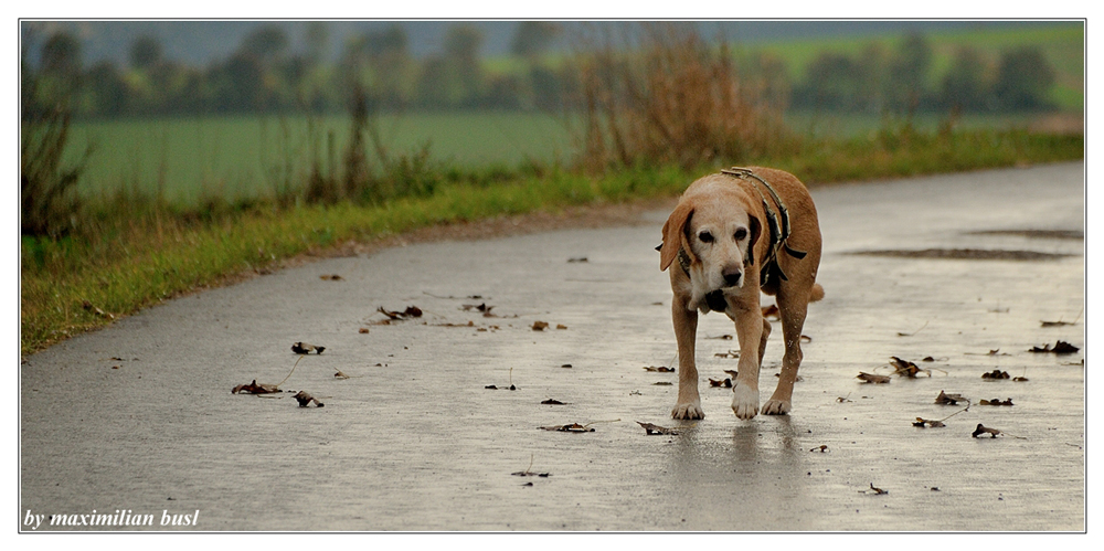 I am walking...