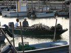 I barcaioli