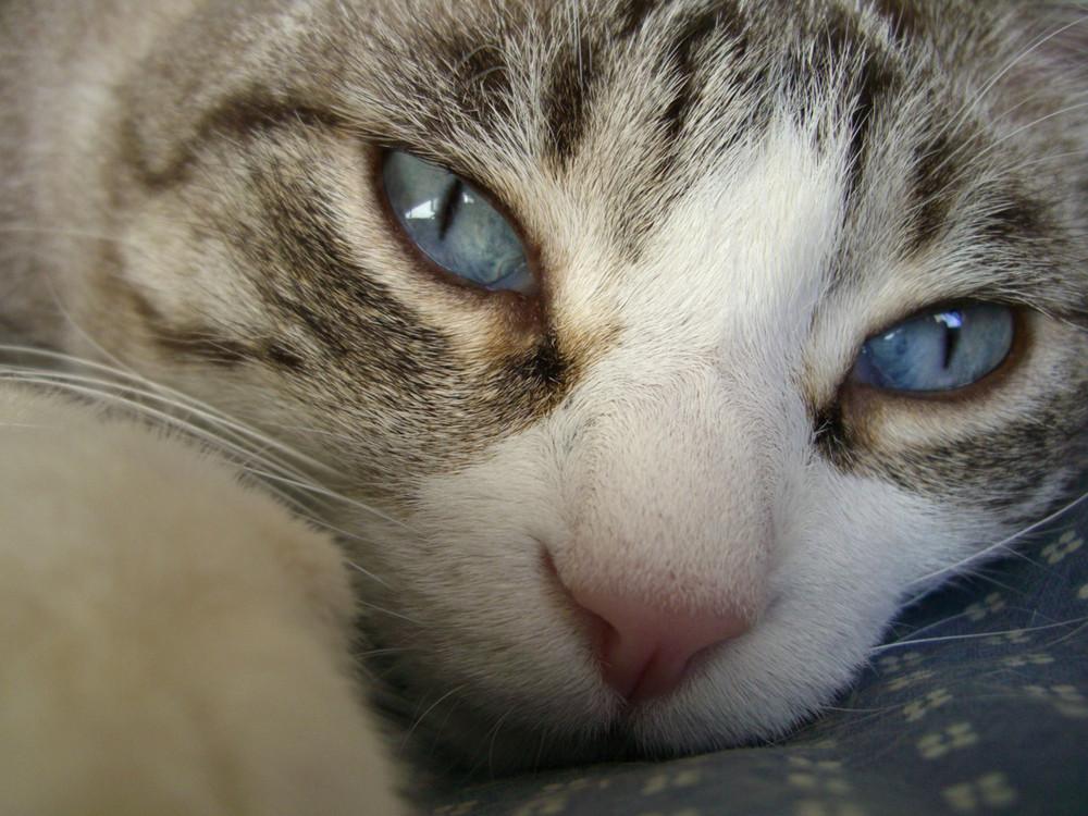 i bellissimi occhi azzurri del mio Sgt.Pepper
