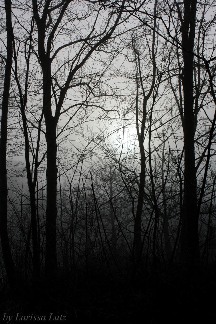 I Can Feel The Night Beginning.