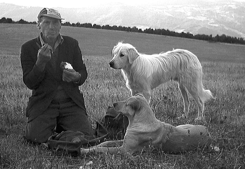 I cani del pastore