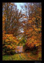 ..i colori del bosco...