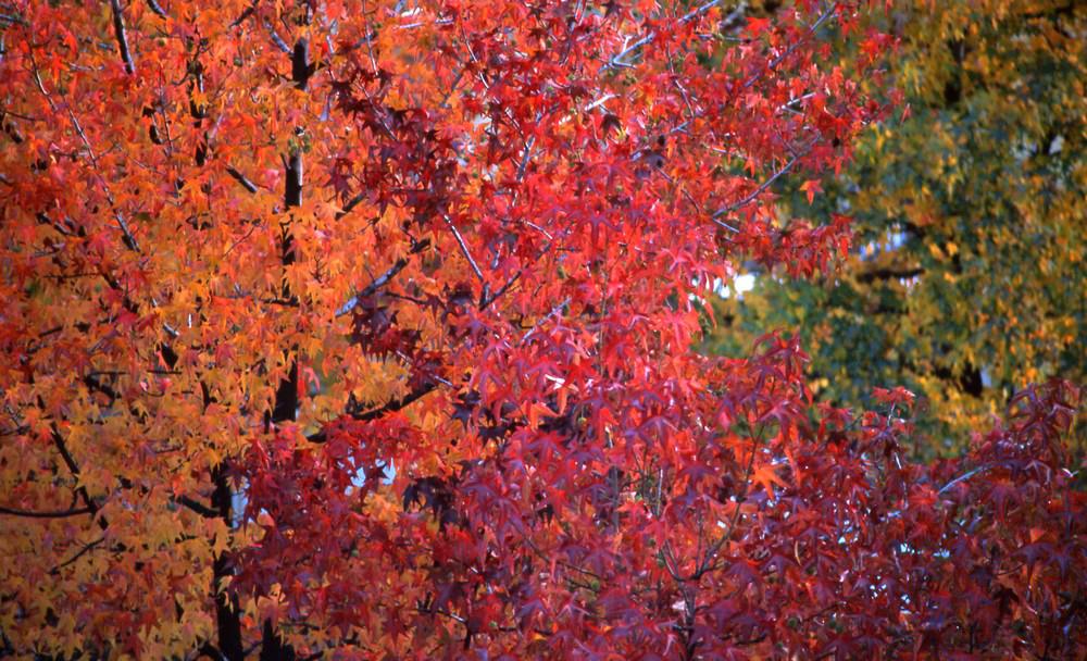 I colori della natura 1 foto immagini paesaggi - Immagini da colorare della natura ...