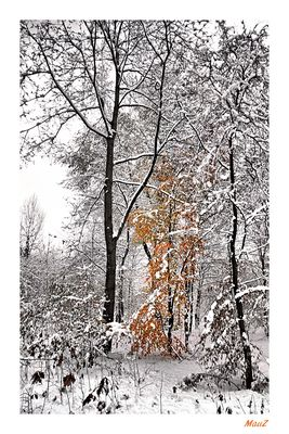 .. I colori della neve (2)...