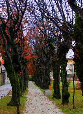 I colori dell'inverno!