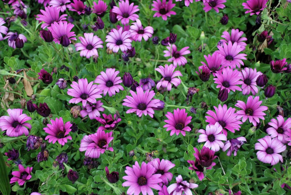 I colori forti della primavera